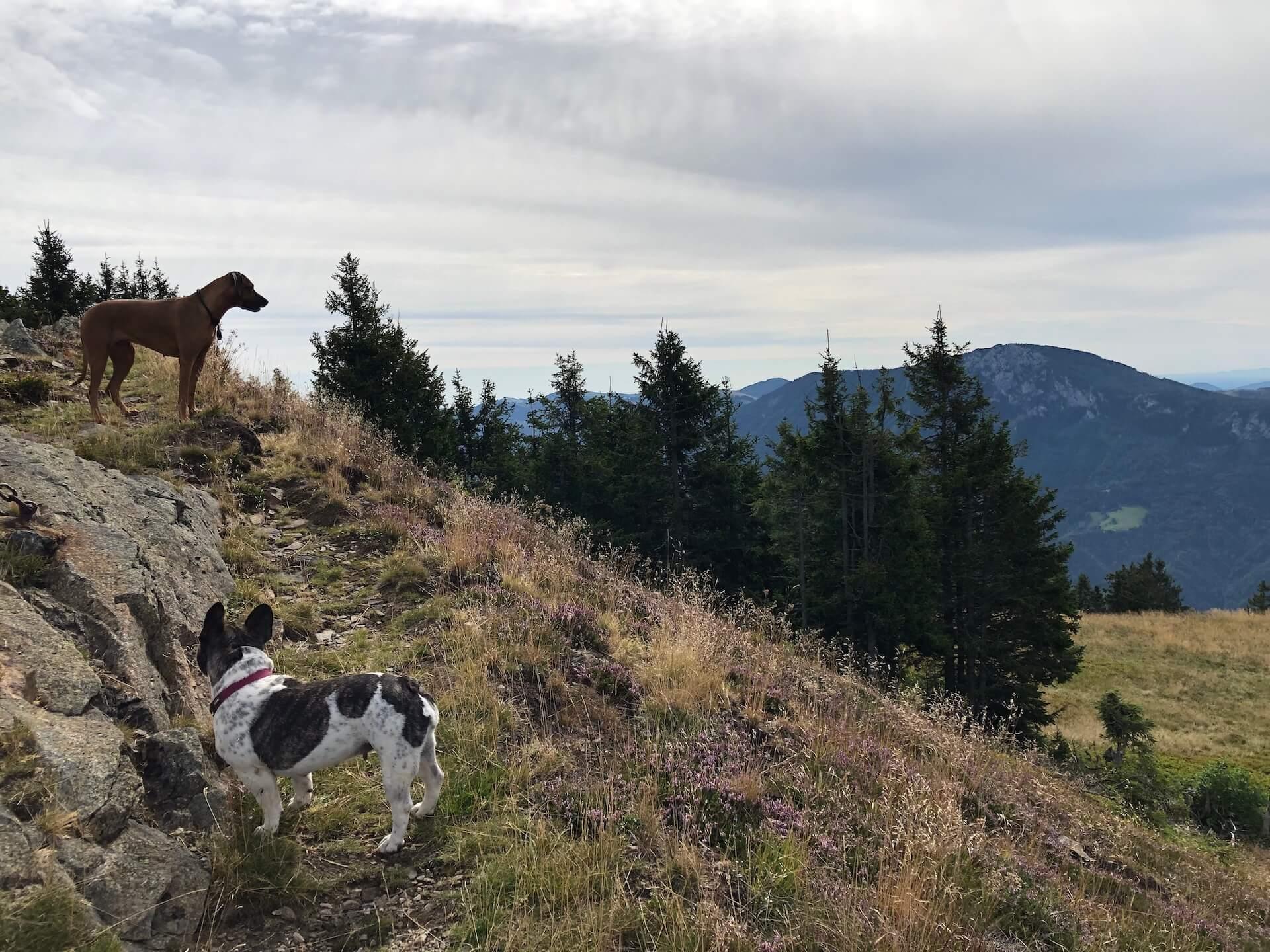 Gemütliche Wanderung von Frauenberg auf das Rennfeld - Hundstage